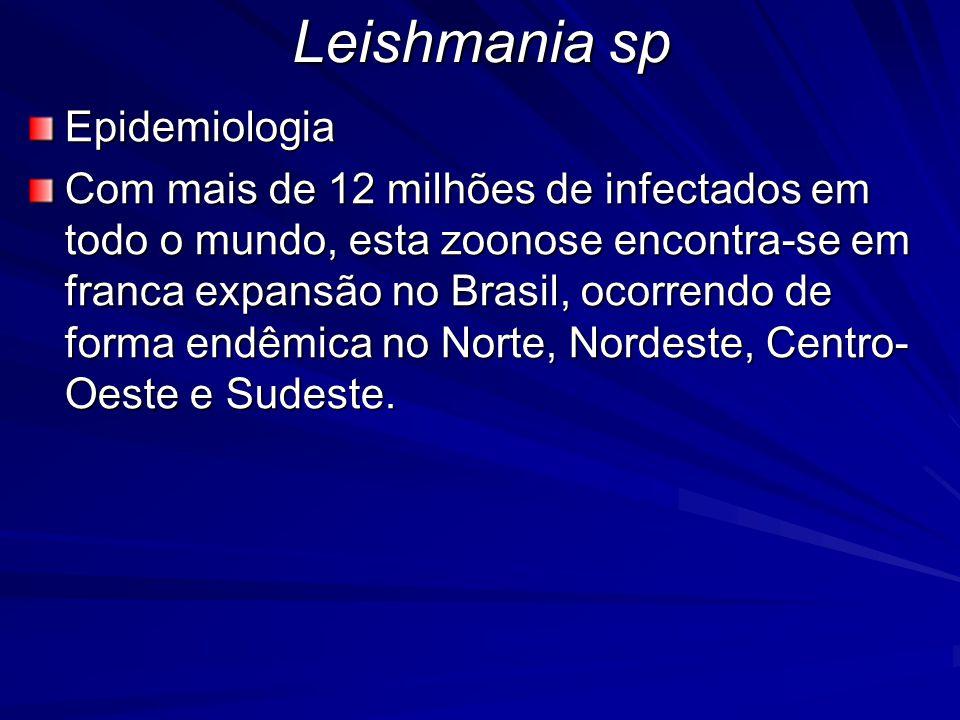 Leishmania sp Epidemiologia Com mais de 12 milhões de infectados em todo o mundo, esta zoonose encontra-se em franca expansão no Brasil, ocorrendo de