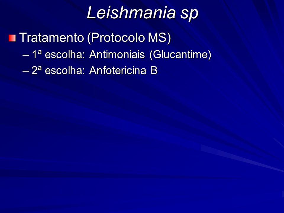 Leishmania sp Tratamento (Protocolo MS) –1ª escolha: Antimoniais (Glucantime) –2ª escolha: Anfotericina B