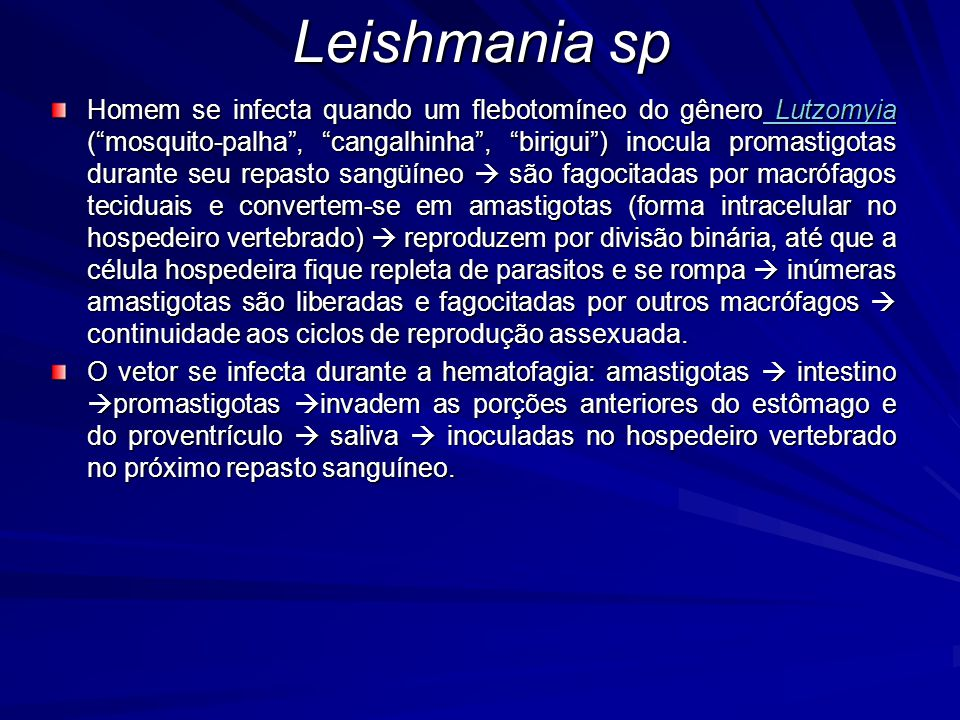 """Homem se infecta quando um flebotomíneo do gênero Lutzomyia (""""mosquito-palha"""", """"cangalhinha"""", """"birigui"""") inocula promastigotas durante seu repasto san"""