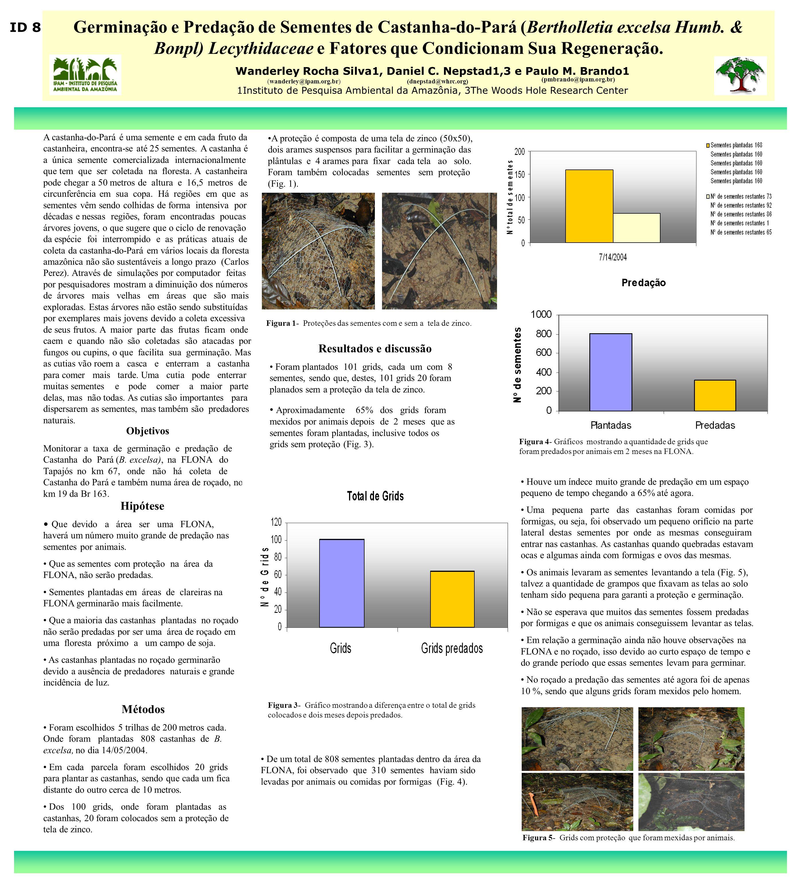 Germinação e Predação de Sementes de Castanha-do-Pará (Bertholletia excelsa Humb. & Bonpl) Lecythidaceae e Fatores que Condicionam Sua Regeneração. Wa