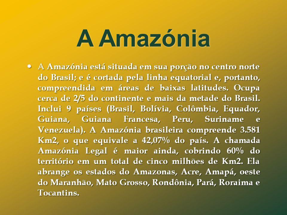 A Amazónia  A Amazónia está situada em sua porção no centro norte do Brasil; e é cortada pela linha equatorial e, portanto, compreendida em áreas de