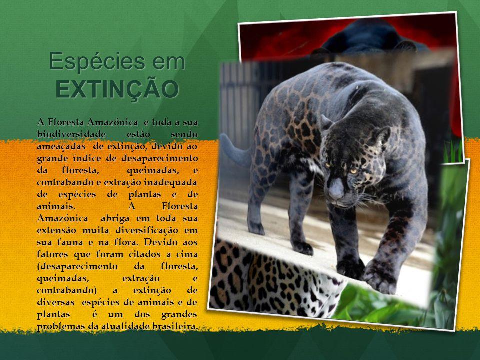 Espécies em EXTINÇÃO A Floresta Amazónica e toda a sua biodiversidade estão sendo ameaçadas de extinção, devido ao grande índice de desaparecimento da