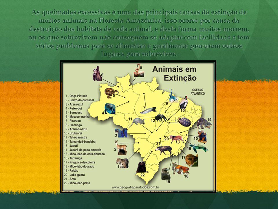 As queimadas excessivas é uma das principais causas da extinção de muitos animais na Floresta Amazónica, isso ocorre por causa da destruição dos habit