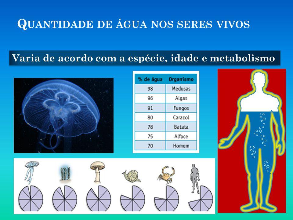 Q UANTIDADE DE ÁGUA NOS SERES VIVOS Varia de acordo com a espécie, idade e metabolismo