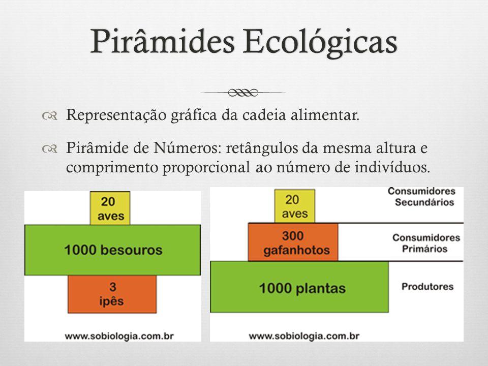 Pirâmides EcológicasPirâmides Ecológicas  Representação gráfica da cadeia alimentar.  Pirâmide de Números: retângulos da mesma altura e comprimento
