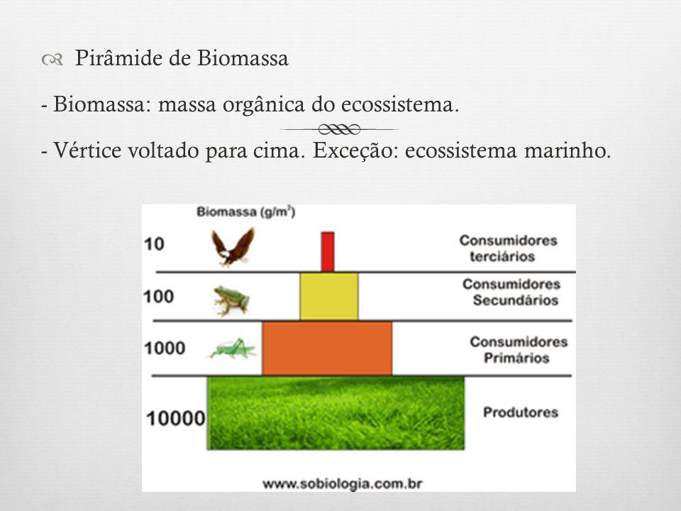  Pirâmide de Biomassa - Biomassa: massa orgânica do ecossistema. - Vértice voltado para cima. Exceção: ecossistema marinho.