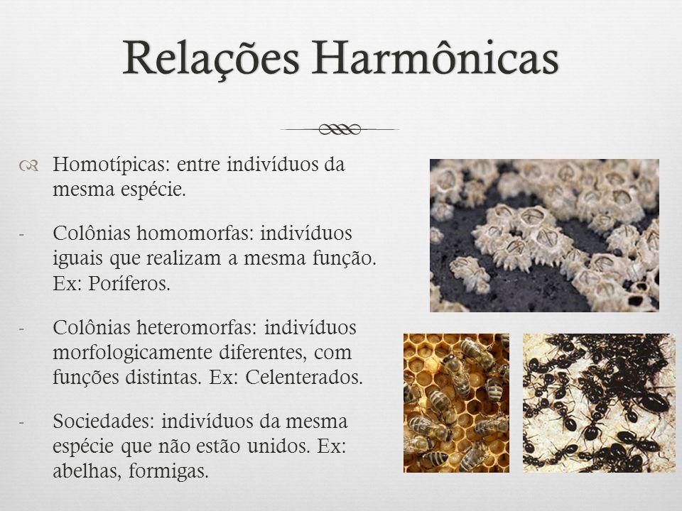Relações HarmônicasRelações Harmônicas  Homotípicas: entre indivíduos da mesma espécie. -Colônias homomorfas: indivíduos iguais que realizam a mesma