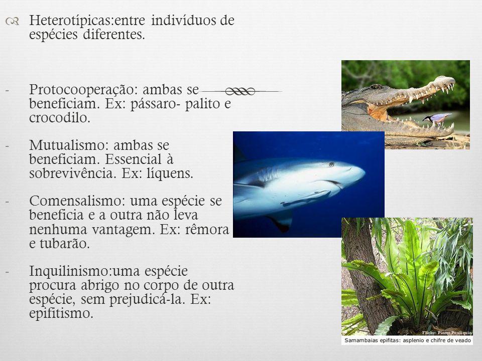  Heterotípicas:entre indivíduos de espécies diferentes. -Protocooperação: ambas se beneficiam. Ex: pássaro- palito e crocodilo. -Mutualismo: ambas se