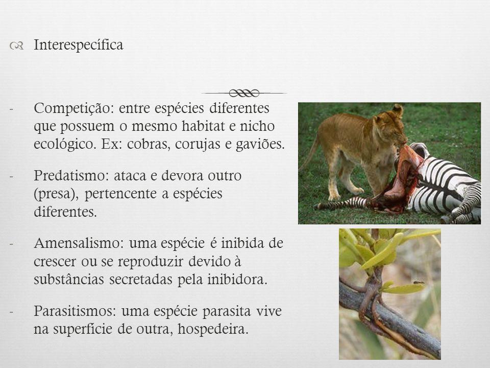  Interespecífica -Competição: entre espécies diferentes que possuem o mesmo habitat e nicho ecológico. Ex: cobras, corujas e gaviões. -Predatismo: at
