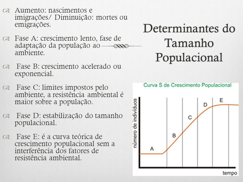 Determinantes do Tamanho Populacional  Aumento: nascimentos e imigrações/ Diminuição: mortes ou emigrações.  Fase A: crescimento lento, fase de adap