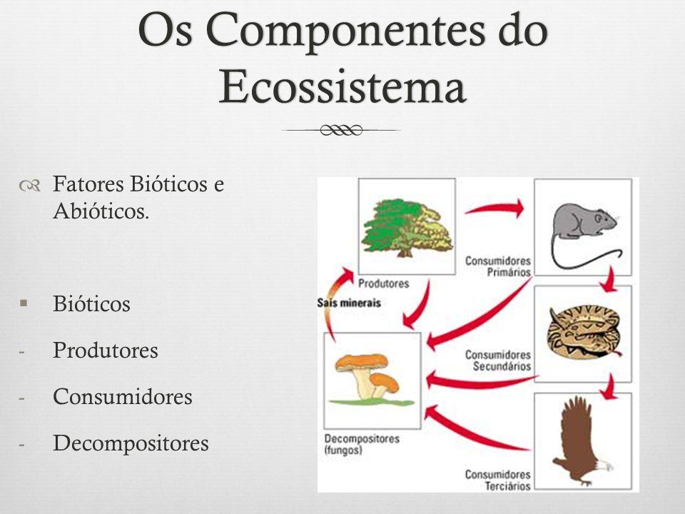 Os Componentes do Ecossistema  Fatores Bióticos e Abióticos.  Bióticos -Produtores -Consumidores -Decompositores