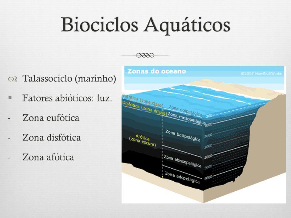 Biociclos AquáticosBiociclos Aquáticos  Talassociclo (marinho)  Fatores abióticos: luz. - Zona eufótica -Zona disfótica -Zona afótica