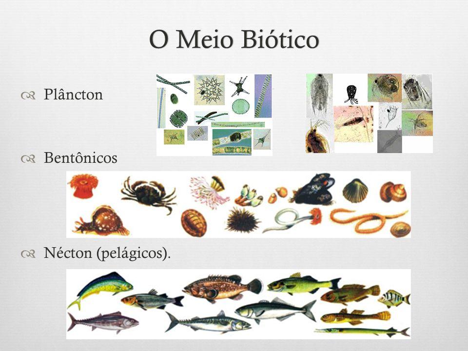 O Meio BióticoO Meio Biótico  Plâncton  Bentônicos  Nécton (pelágicos).