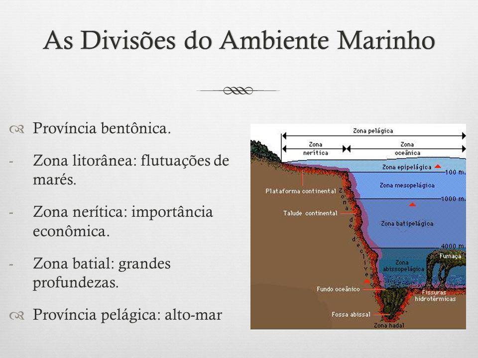 As Divisões do Ambiente MarinhoAs Divisões do Ambiente Marinho  Província bentônica. -Zona litorânea: flutuações de marés. -Zona nerítica: importânci