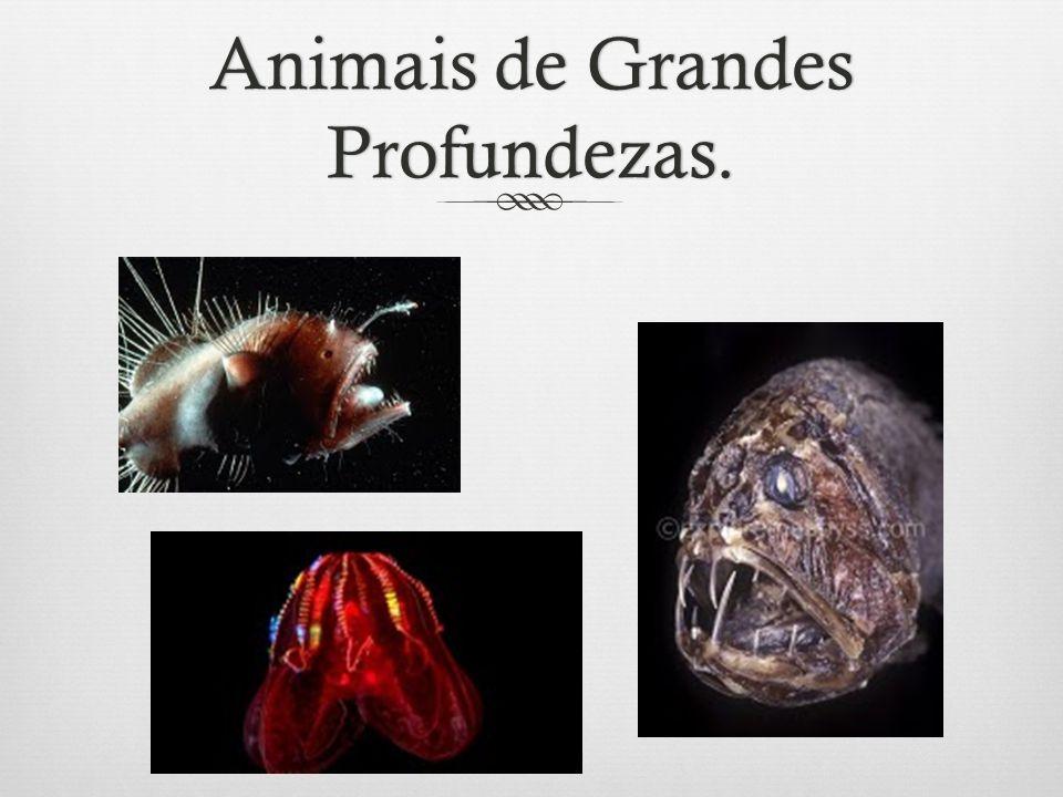 Animais de Grandes Profundezas.