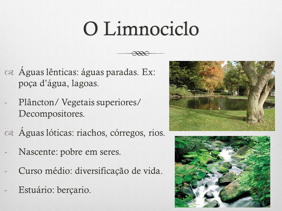 O LimnocicloO Limnociclo  Águas lênticas: águas paradas. Ex: poça d'água, lagoas. -Plâncton/ Vegetais superiores/ Decompositores.  Águas lóticas: ri