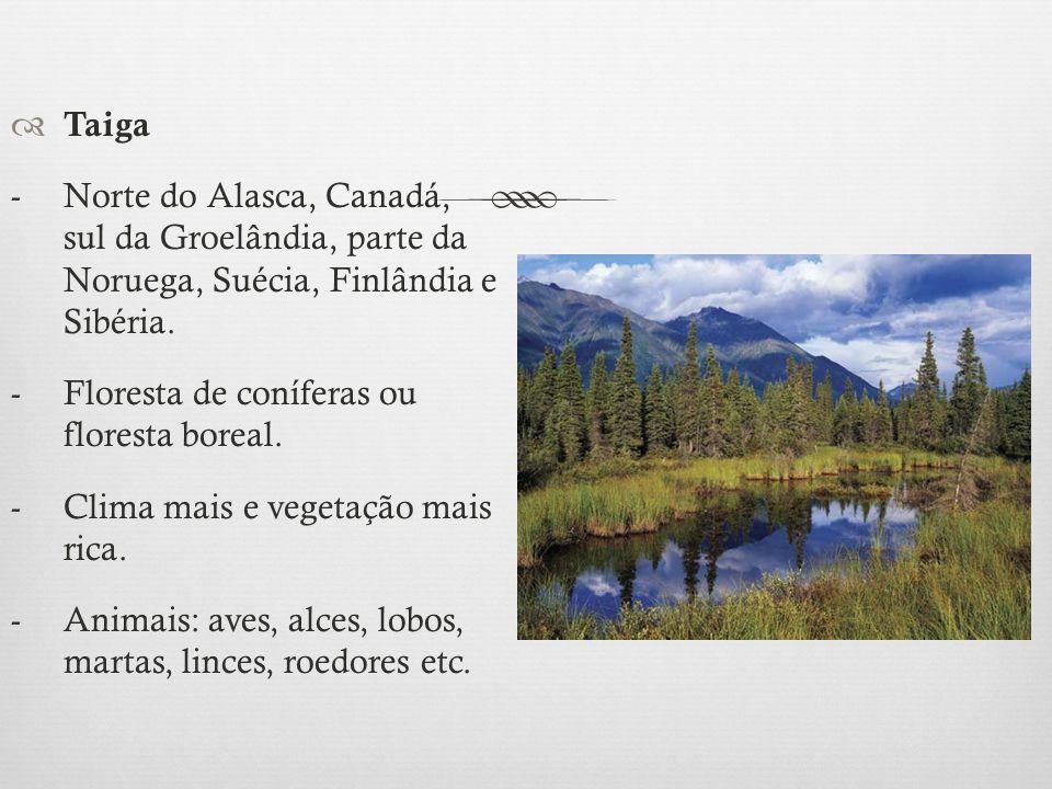  Taiga - Norte do Alasca, Canadá, sul da Groelândia, parte da Noruega, Suécia, Finlândia e Sibéria. -Floresta de coníferas ou floresta boreal. - Clim