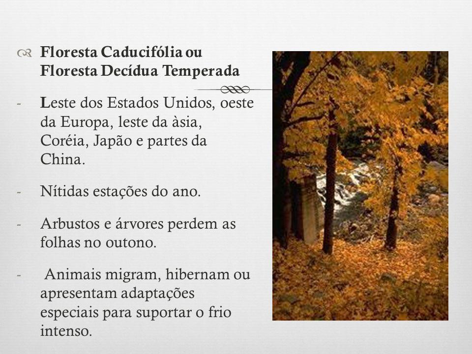  Floresta Caducifólia ou Floresta Decídua Temperada - L este dos Estados Unidos, oeste da Europa, leste da àsia, Coréia, Japão e partes da China. -Ní