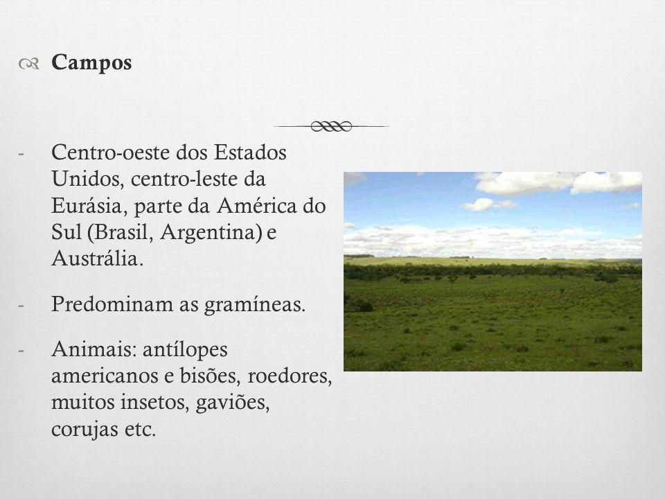  Campos -Centro-oeste dos Estados Unidos, centro-leste da Eurásia, parte da América do Sul (Brasil, Argentina) e Austrália. -Predominam as gramíneas.