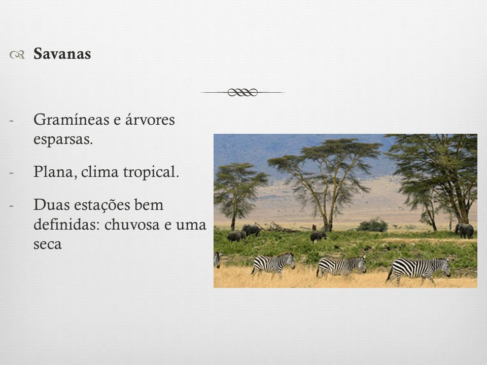 Savanas -Gramíneas e árvores esparsas. -Plana, clima tropical. -Duas estações bem definidas: chuvosa e uma seca
