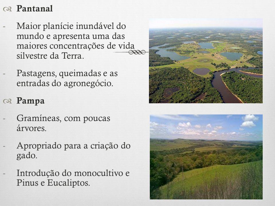  Pantanal -Maior planície inundável do mundo e apresenta uma das maiores concentrações de vida silvestre da Terra. -Pastagens, queimadas e as entrada