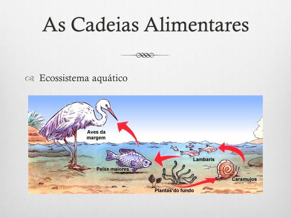 As Cadeias AlimentaresAs Cadeias Alimentares  Ecossistema aquático