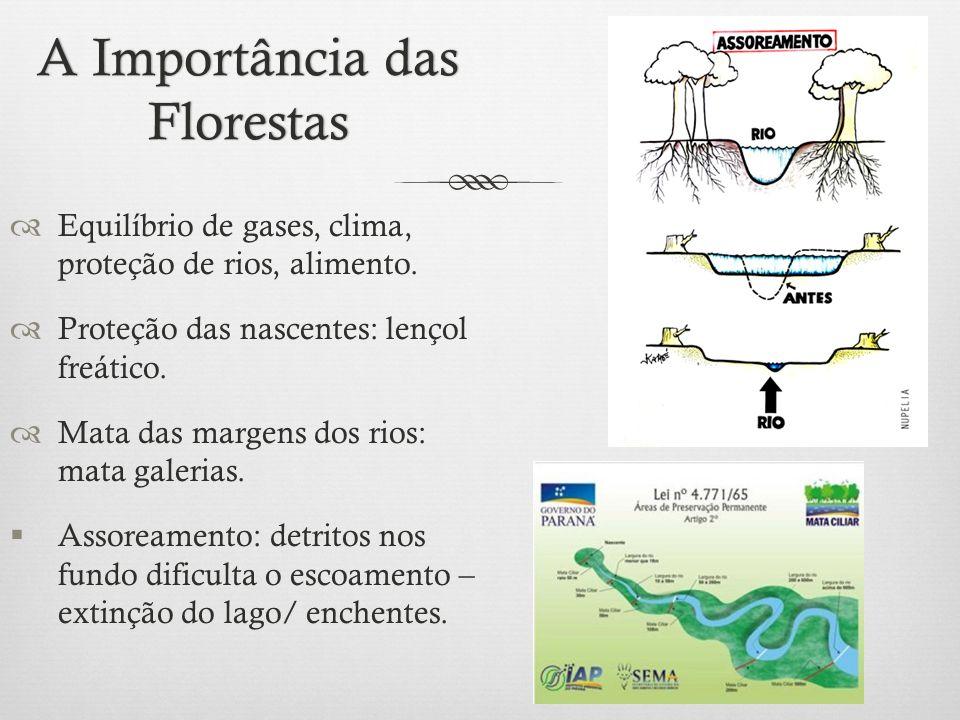 A Importância das Florestas  Equilíbrio de gases, clima, proteção de rios, alimento.  Proteção das nascentes: lençol freático.  Mata das margens do
