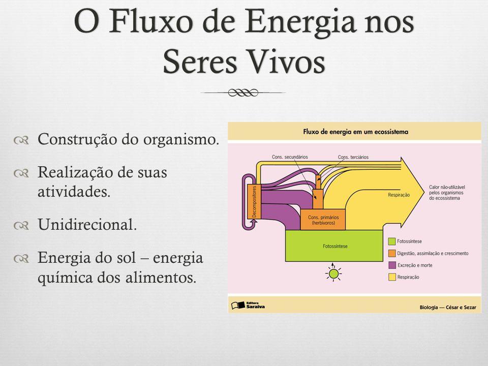 O Fluxo de Energia nos Seres Vivos  Construção do organismo.  Realização de suas atividades.  Unidirecional.  Energia do sol – energia química dos