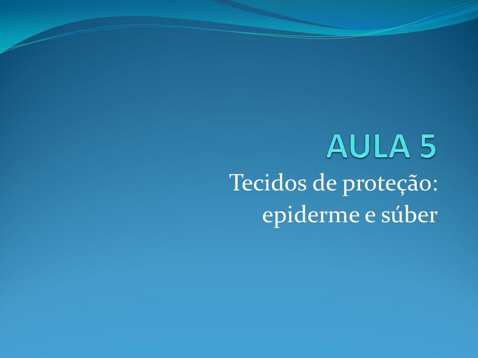 Tecidos de proteção: epiderme e súber