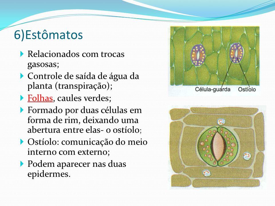 6)Estômatos  Relacionados com trocas gasosas;  Controle de saída de água da planta (transpiração);  Folhas, caules verdes;  Formado por duas células em forma de rim, deixando uma abertura entre elas- o ostíolo ;  Ostíolo: comunicação do meio interno com externo;  Podem aparecer nas duas epidermes.
