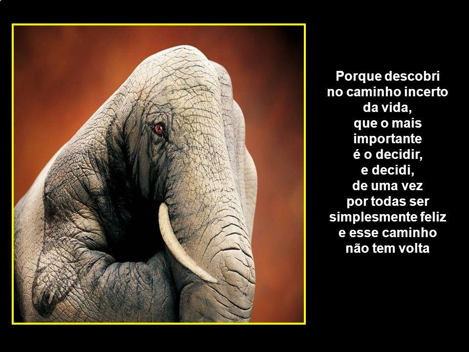 adao-las@ig.com.br Porque descobri no caminho incerto da vida, que o mais importante é o decidir, e decidi, de uma vez por todas ser simplesmente feliz e esse caminho não tem volta