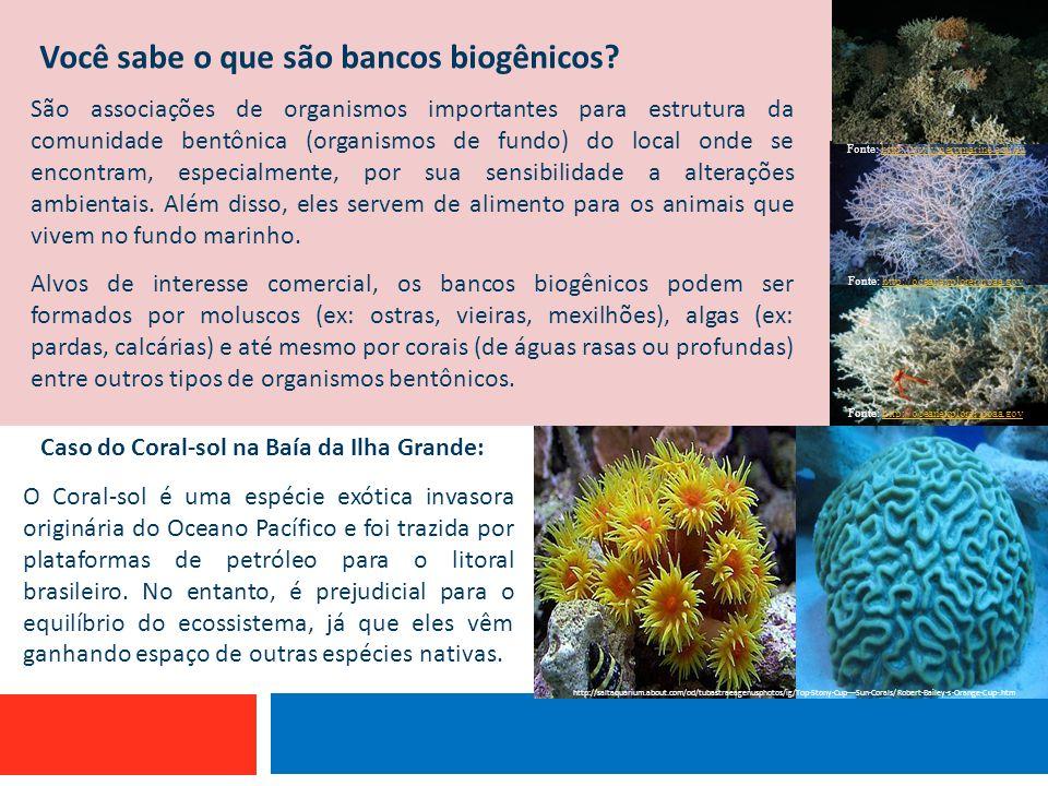 Você sabe o que são bancos biogênicos? Embarcação que utiliza linha de mão São associações de organismos importantes para estrutura da comunidade bent