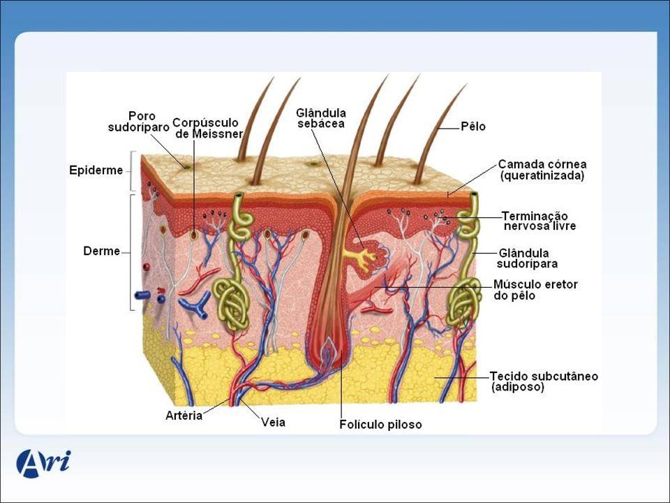 A epiderme • Camada de cima da pele.