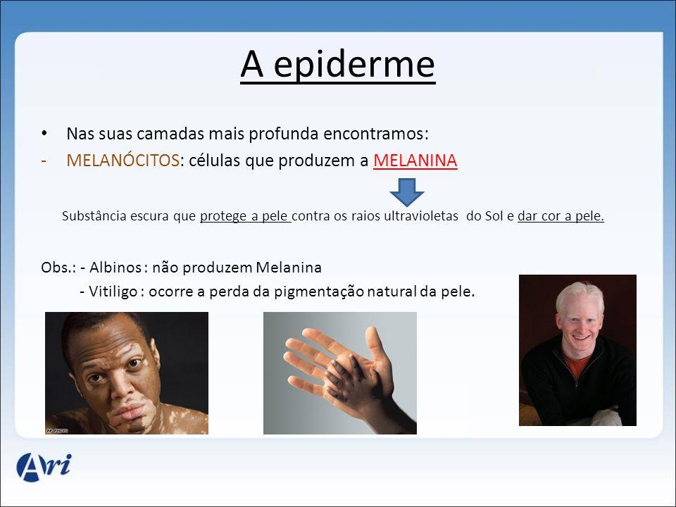 A epiderme • Nas suas camadas mais profunda encontramos: -MELANÓCITOS: células que produzem a MELANINA Substância escura que protege a pele contra os