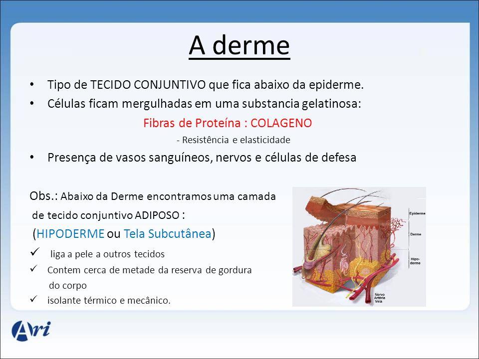 A derme • Tipo de TECIDO CONJUNTIVO que fica abaixo da epiderme. • Células ficam mergulhadas em uma substancia gelatinosa: Fibras de Proteína : COLAGE