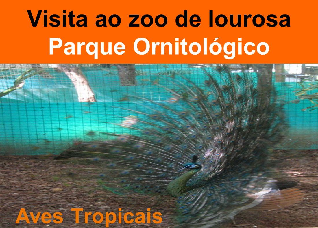 Visita ao zoo de lourosa Parque Ornitológico Aves Tropicais