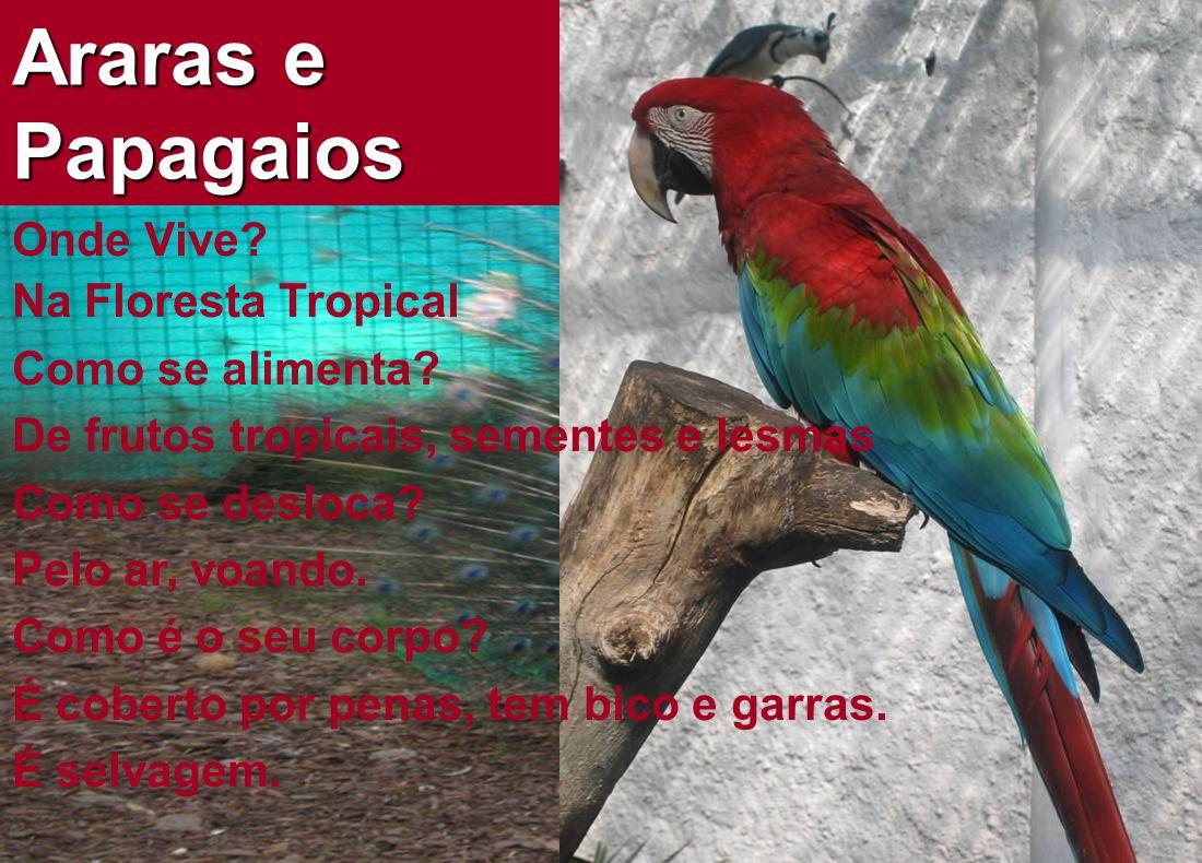 Araras e Papagaios Onde Vive.Na Floresta Tropical Como se alimenta.