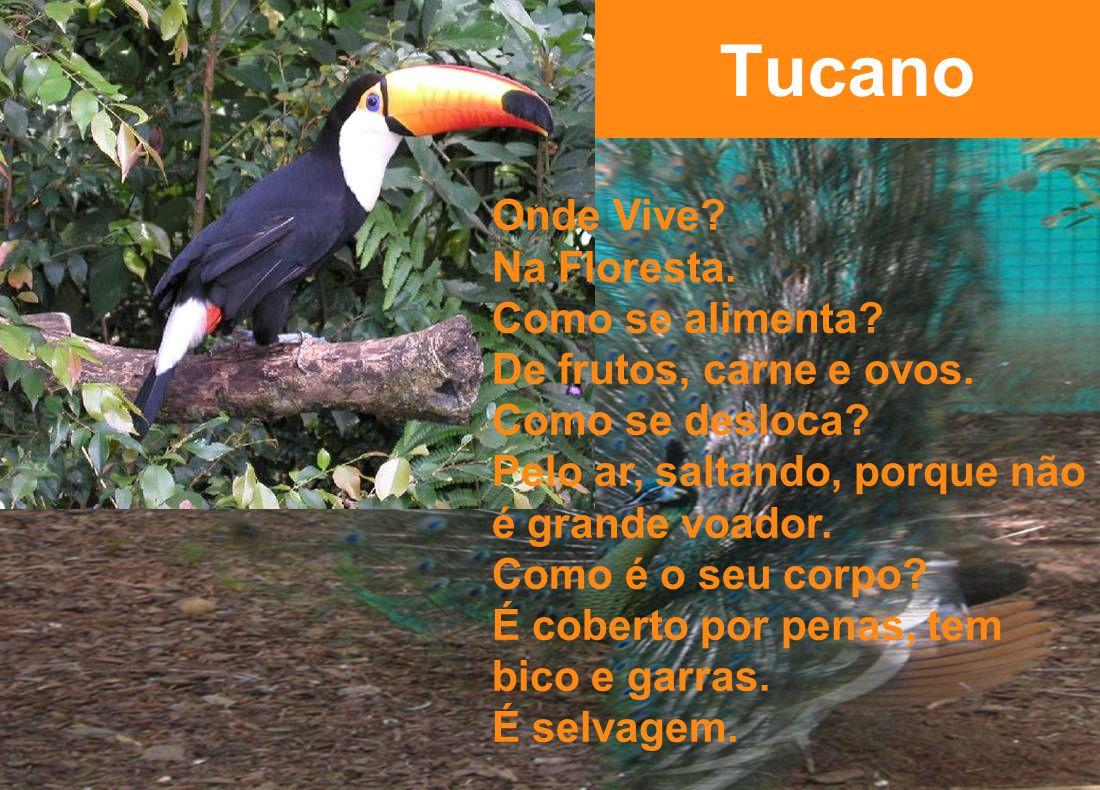 Tucano Onde Vive.Na Floresta. Como se alimenta. De frutos, carne e ovos.