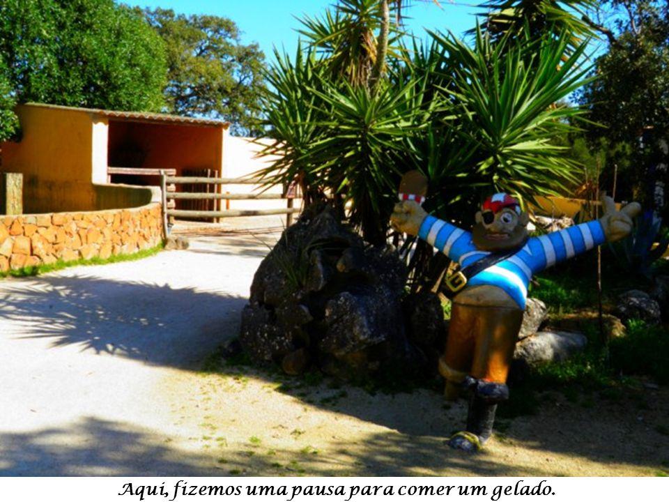 Pavão Azul – Pavo Cristatus – O mais conhecido é o pavão da Índia. Curiosidade: Se caírem as penas da cauda elas nascerão novamente.