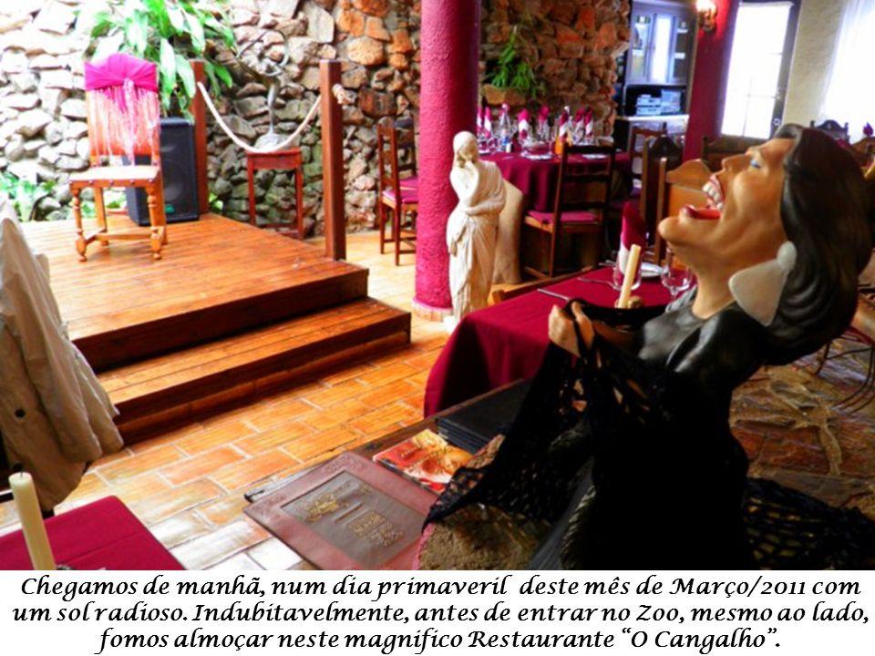 Tucano Toco – Ramphastos Toco - originário da América Central e da América do Sul (desde Guianas até ao Norte da Argentina).