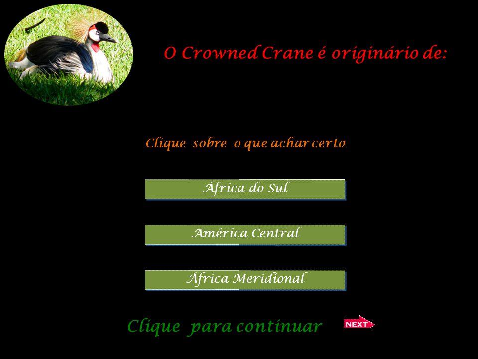 Qual o nome deste animal ? Clique sobre o que achar certo Lémur castanho Lémur de cabeça preta Lémur vermelho Clique para continuar