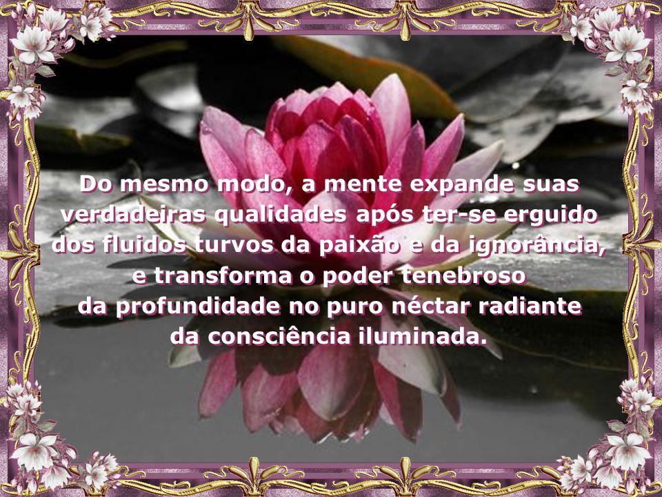 """""""Tal como a Flor de Lótus, o Espírito cresce da escuridão do lodo para a superfície da água, abrindo suas flores somente após ter-se erguido além da s"""