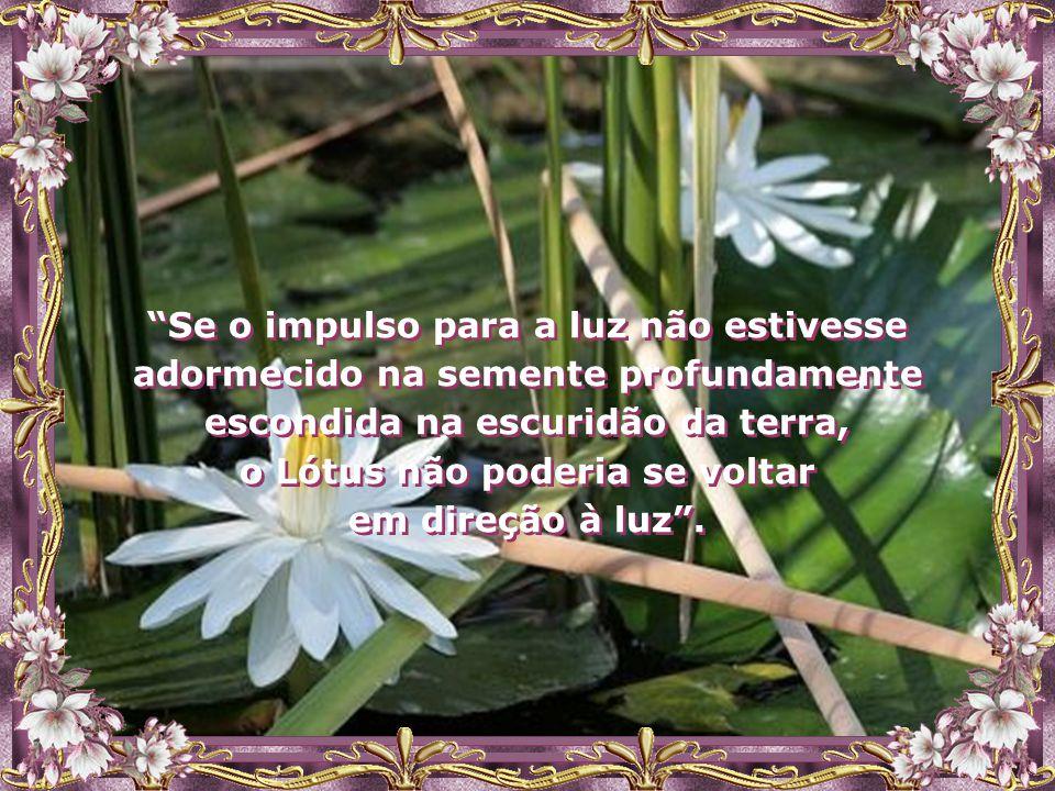 O Lótus é a síntese viva do mais profundo e do mais elevado, da escuridão e da luz, do material e do imaterial, das limitações da individualidade e da
