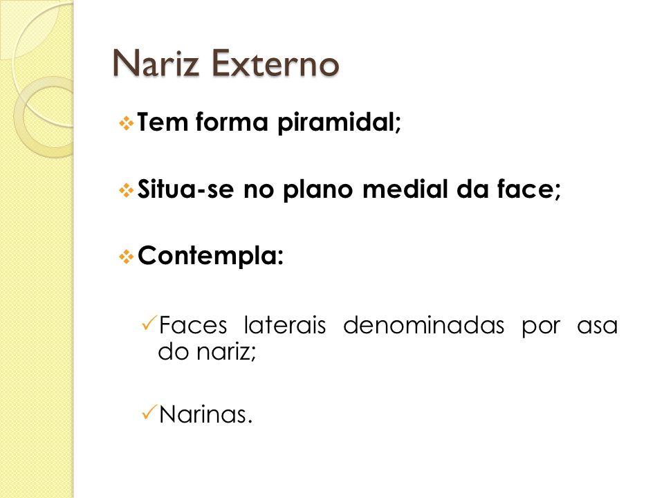 Nariz Externo  Tem forma piramidal;  Situa-se no plano medial da face;  Contempla:  Faces laterais denominadas por asa do nariz;  Narinas.