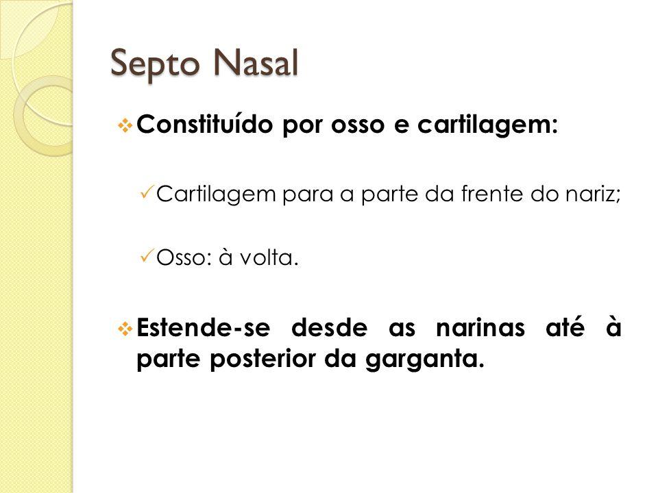 Septo Nasal  Constituído por osso e cartilagem:  Cartilagem para a parte da frente do nariz;  Osso: à volta.  Estende-se desde as narinas até à pa
