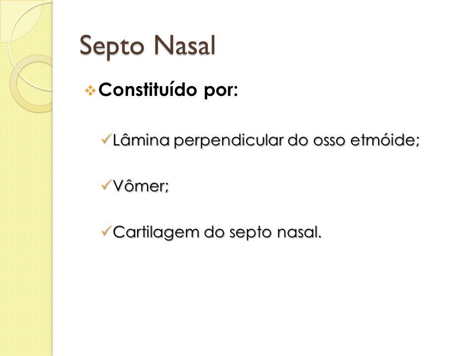 Septo Nasal  Constituído por:  Lâmina perpendicular do osso etmóide;  Vômer;  Cartilagem do septo nasal.