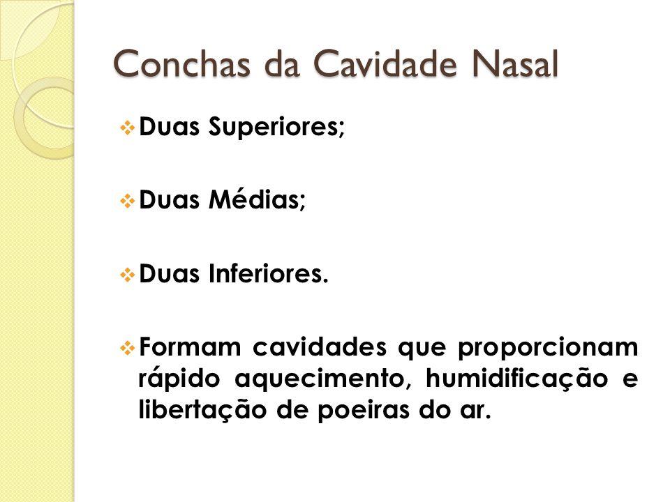 Conchas da Cavidade Nasal DDuas Superiores; DDuas Médias; DDuas Inferiores. FFormam cavidades que proporcionam rápido aquecimento, humidificaç