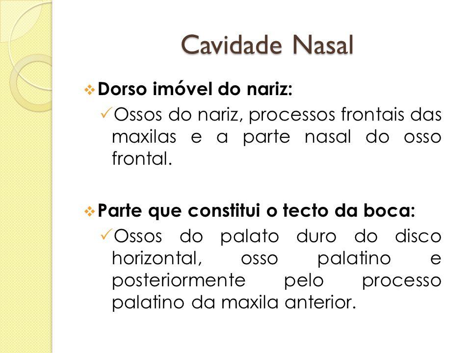 Cavidade Nasal  Dorso imóvel do nariz:  Ossos do nariz, processos frontais das maxilas e a parte nasal do osso frontal.  Parte que constitui o tect
