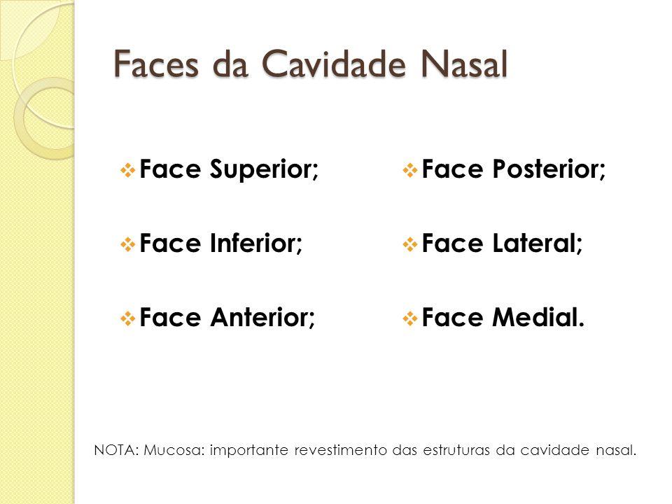 Faces da Cavidade Nasal  Face Superior;  Face Inferior;  Face Anterior;  Face Posterior;  Face Lateral;  Face Medial. NOTA: Mucosa: importante r