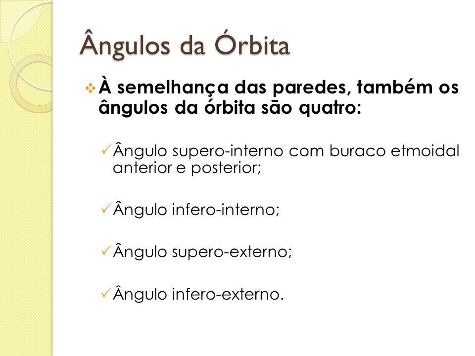 Ângulos da Órbita  À semelhança das paredes, também os ângulos da órbita são quatro:  Ângulo supero-interno com buraco etmoidal anterior e posterior